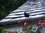 Dove Cottage, Grasmere, in the rain. CREDIT: Nathaniel Hunt